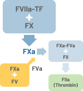 FVIIIに依存しないSMAT検査試薬キット原理図解